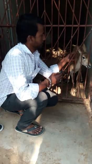 ಪ್ರಜ್ವಲ್ ದೇವರಾಜ್ - ShareChat