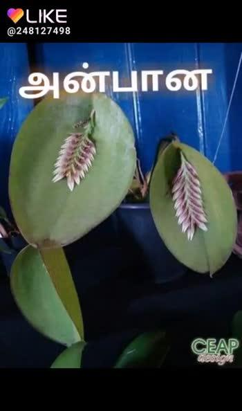 🌞காலை வணக்கம் - ShareChat