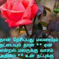 Raju - Author on ShareChat: Funny, Romantic, Videos, Shayaris, Quotes