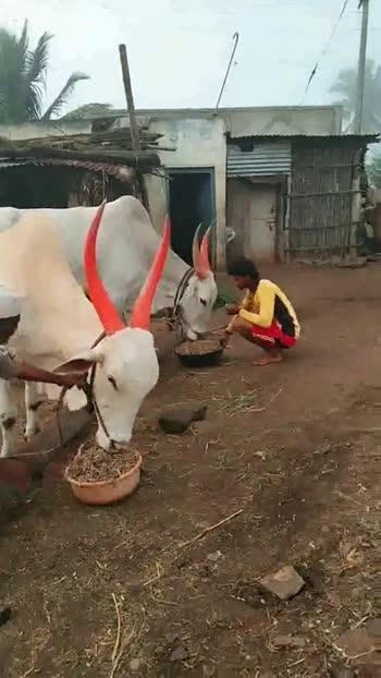 🐶 माझ्या पाळीव प्राण्याचा व्हिडीओ - ShareChat