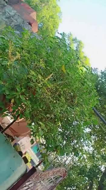 🌳पेड़-पौधे वीडियो - ShareChat
