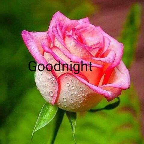 🌑শুভ রাত্রি - Goodnight - ShareChat