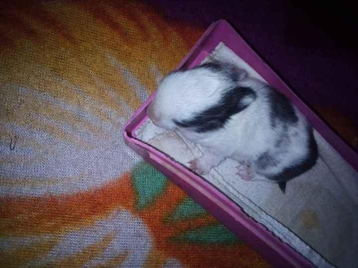 Cute Rabbit - NE DELVINA RU 23 SANGI LAVA WOW - ShareChat