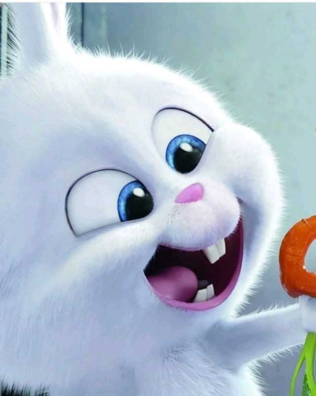 Cute Rabbit - ShareChat