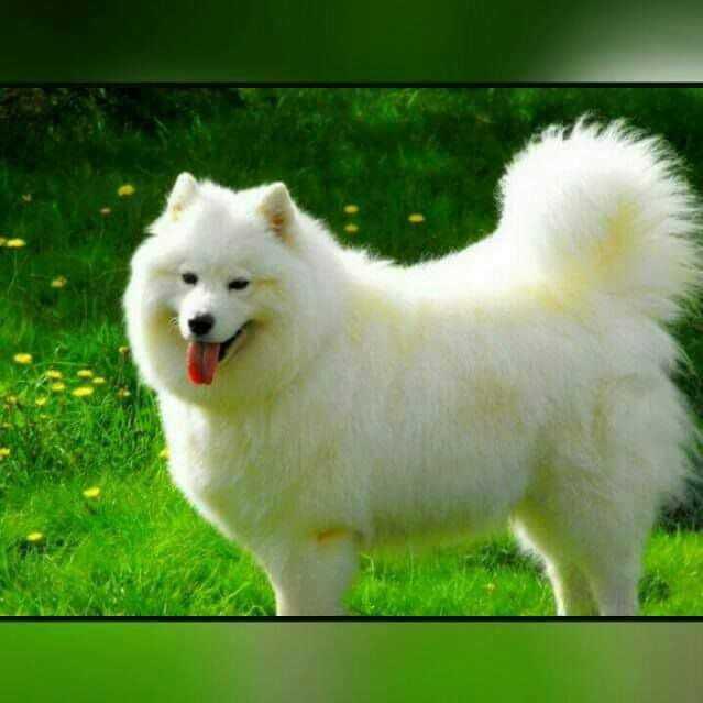 Dog 🐶 - ShareChat