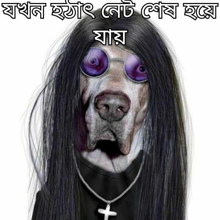 Dog 🐶 - স্মৃঙ্খল ছাৎ নেট ষে ছয়ে যায় - ShareChat