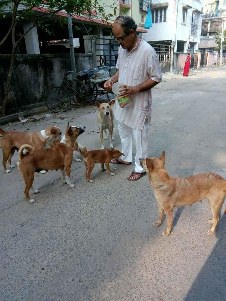 Dog 🐶 - pm ; ) 11 3 . . - ! - ShareChat