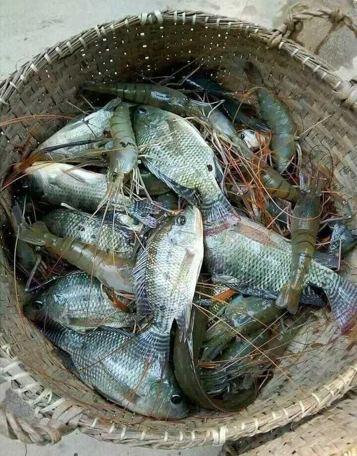 Fish - ShareChat