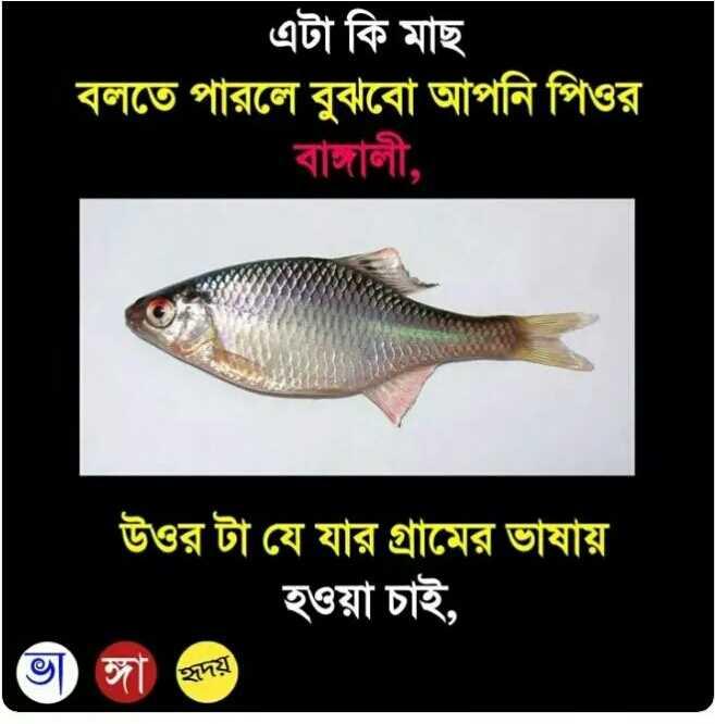 Fish - এটা কি মাছ বলতে পারলে বুঝবাে আপনি পিওর । বাঙ্গালী , উওর টা যে যার গ্রামের ভাষায় হওয়া চাই , | ভাঙ্গা হৃদয় হৃদয় ) - ShareChat