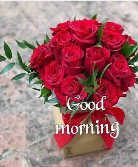 💐Flower photography - Good morning - ShareChat