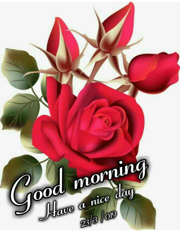 💐Flower photography - Good morning Have a nice day 23 / 3 / 012 - ShareChat