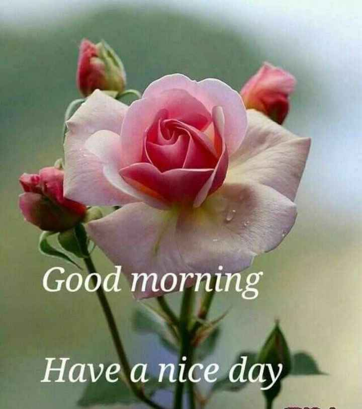 💐Flower photography - Good morning Have a nice day - ShareChat