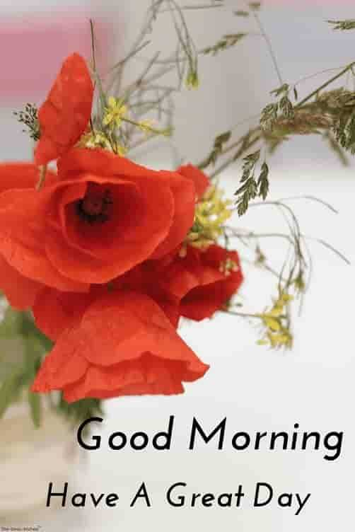 GIFS - Good Morning Have A Great Day - ShareChat