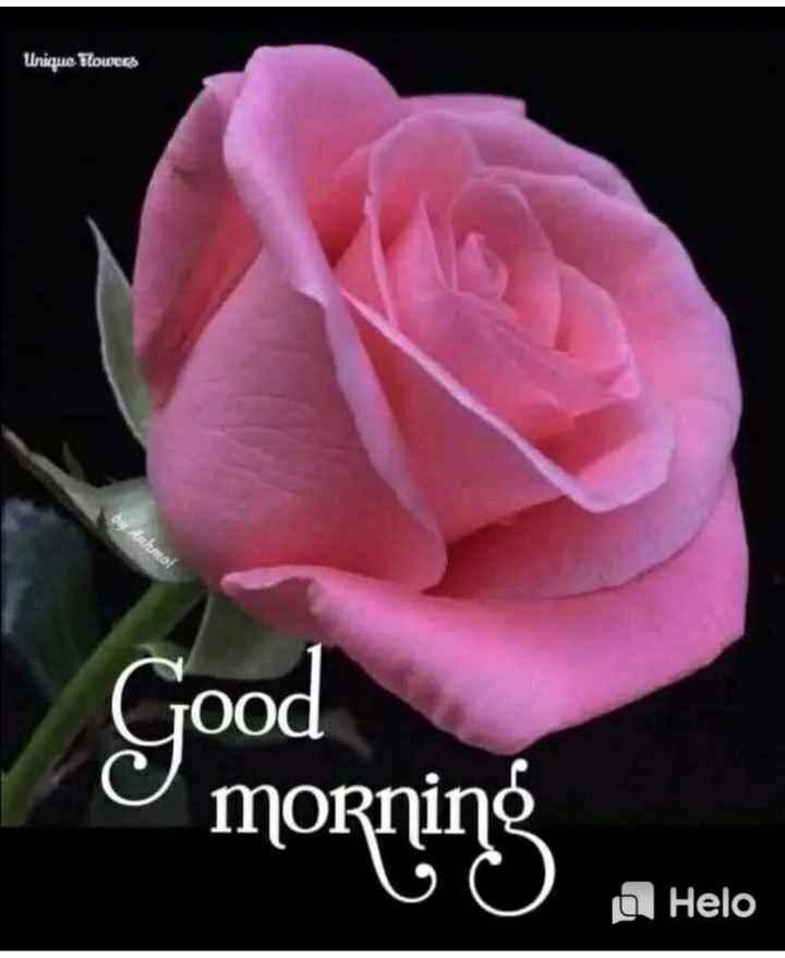 👌 GIFs - Unique Flowers Ou fahmoi Good morning O - ShareChat