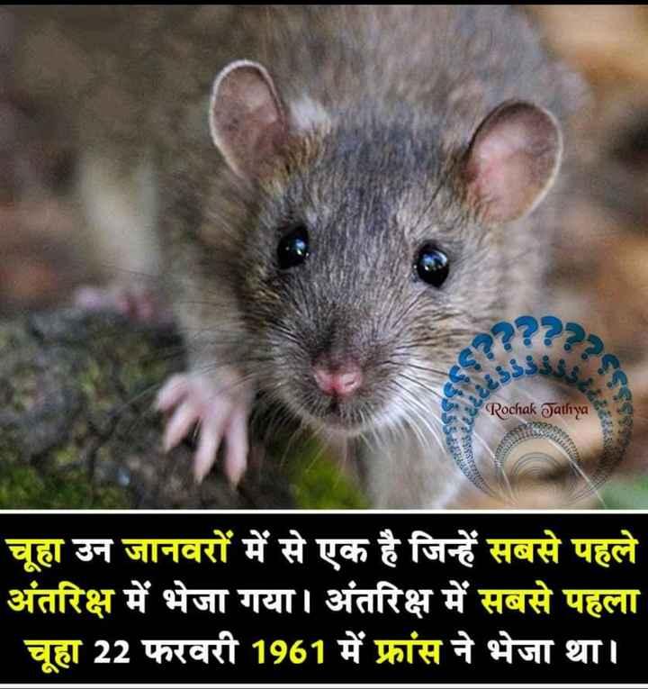 📰GK & करेंट अफेयर्स💡 - 23 . Rochak Jathya चूहा उन जानवरों में से एक है जिन्हें सबसे पहले अंतरिक्ष में भेजा गया । अंतरिक्ष में सबसे पहला - चूहा 22 फरवरी 1961 में फ्रांस ने भेजा था । - ShareChat