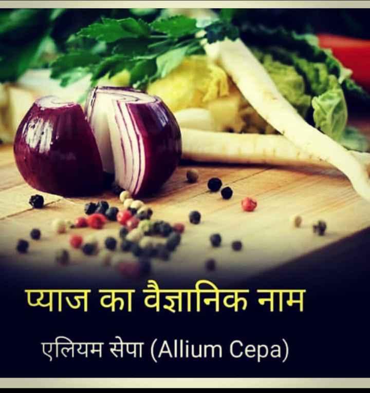 📰GK & करेंट अफेयर्स💡 - प्याज का वैज्ञानिक नाम एलियम सेपा ( Allium Cepa ) - ShareChat