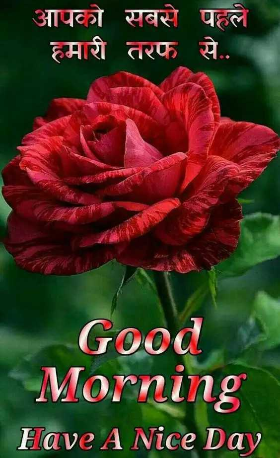🌞 Good Morning🌞 - आपको सबसे पहले हमारी तरफ से . . Good Morning Have A Nice Day - ShareChat