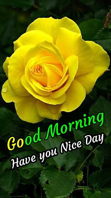 🌞Good Morning🌞 - Good Morning Have you Nice Day - ShareChat