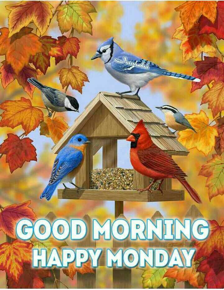 🌞Good Morning🌞 - GOOD MORNING HAPPY MONDAY - ShareChat