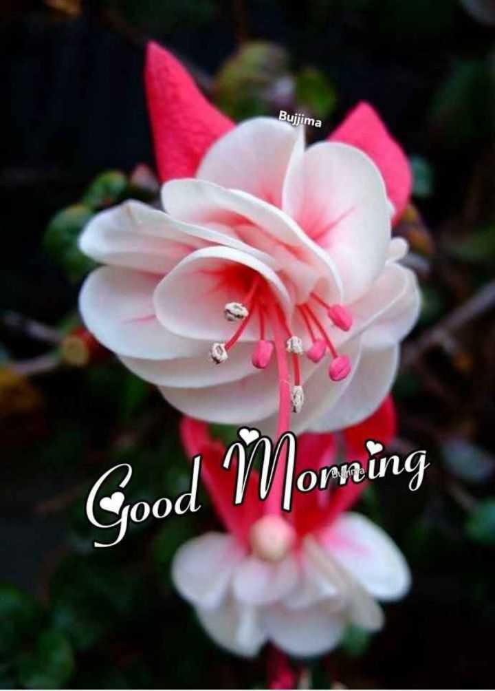 🌞 Good Morning🌞 - Bujjima Good Morning - ShareChat