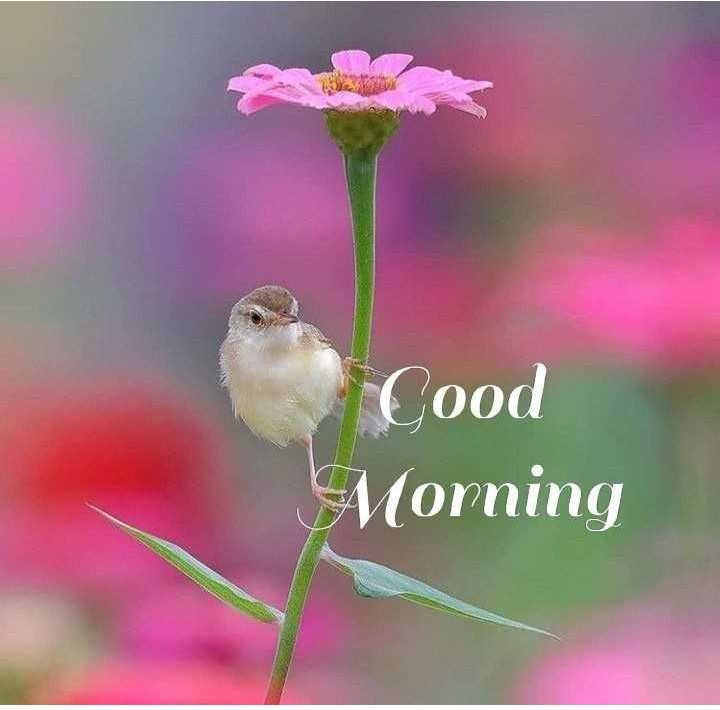 🌞Good Morning🌞 - Cood Morning - ShareChat