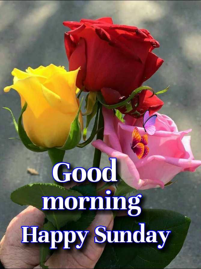 🌞 Good Morning🌞 - Good morning Happy Sunday - ShareChat