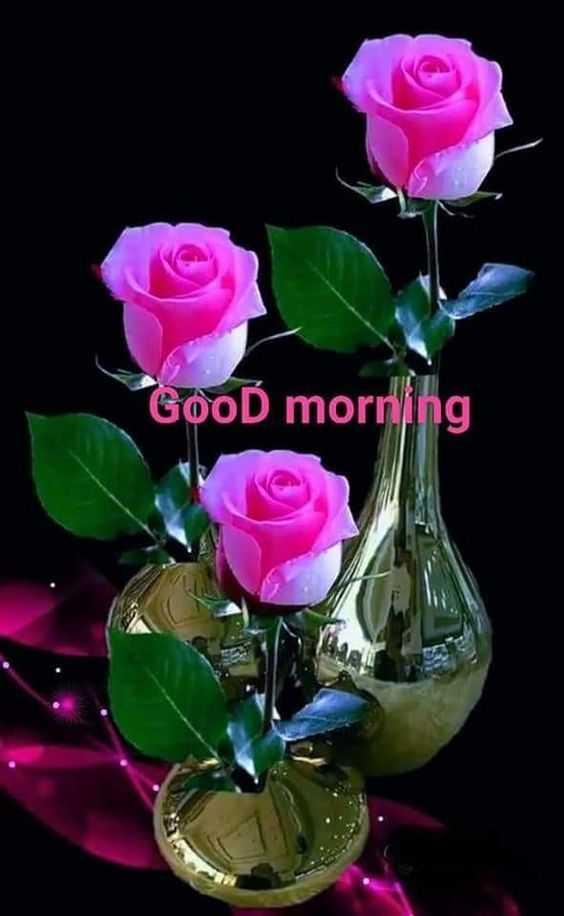 🌞 Good Morning🌞 - GooĎ morning - ShareChat