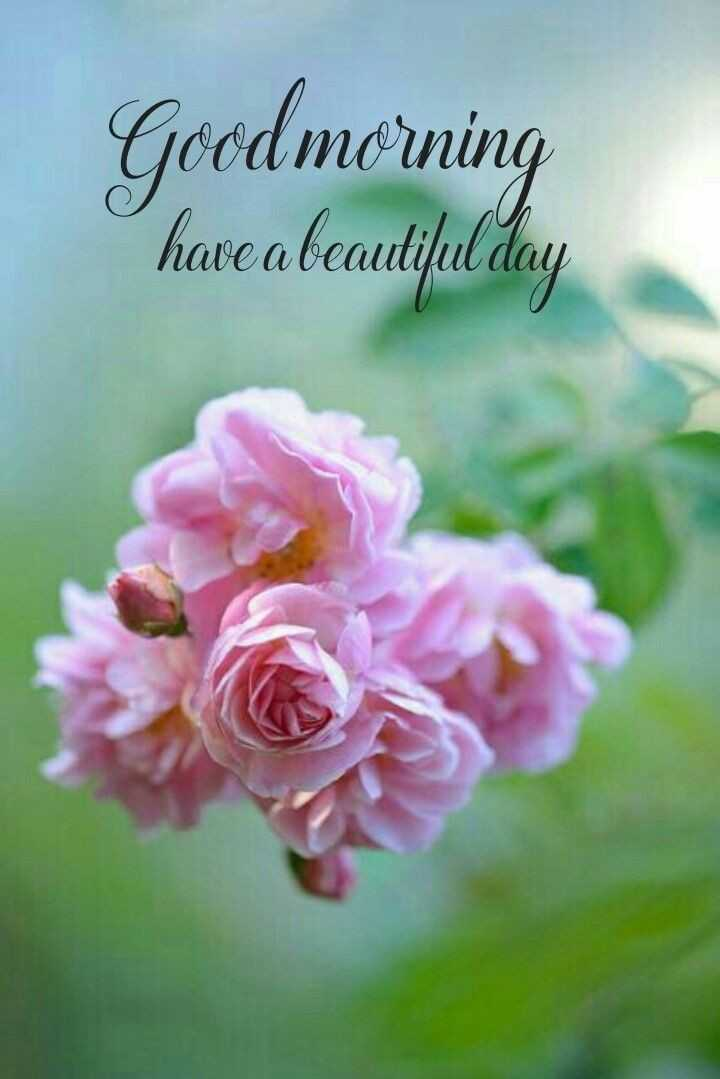 🌞 Good Morning🌞 - Good morning have a beautiful day - ShareChat