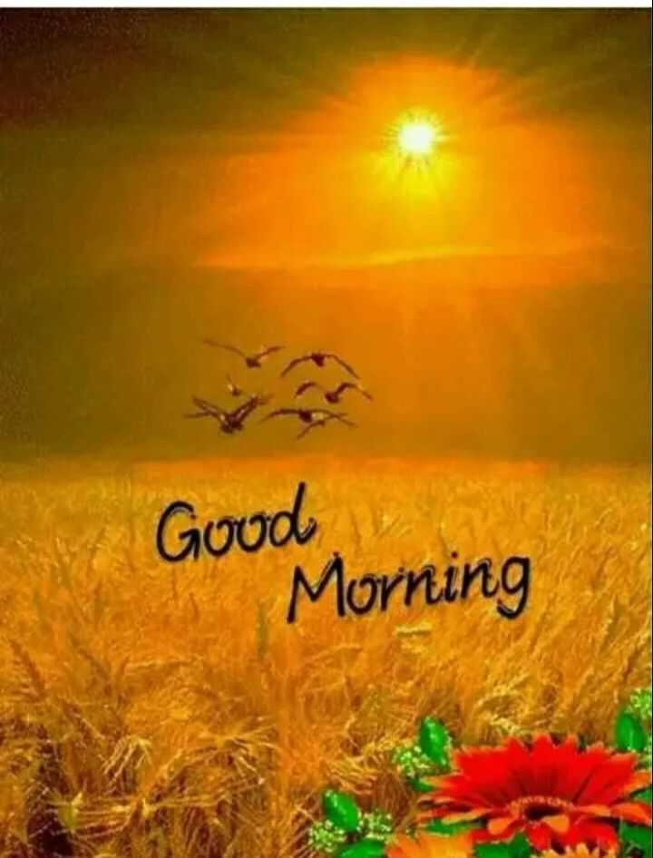 🌅 Good Morning - Good Morning - ShareChat