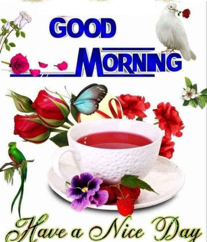🌞 Good Morning🌞 - * GOOD • MORNING Have a Nice Day - ShareChat