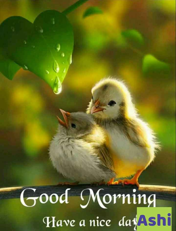 🌅 Good Morning - Good Morning Have a nice daţAshi - ShareChat