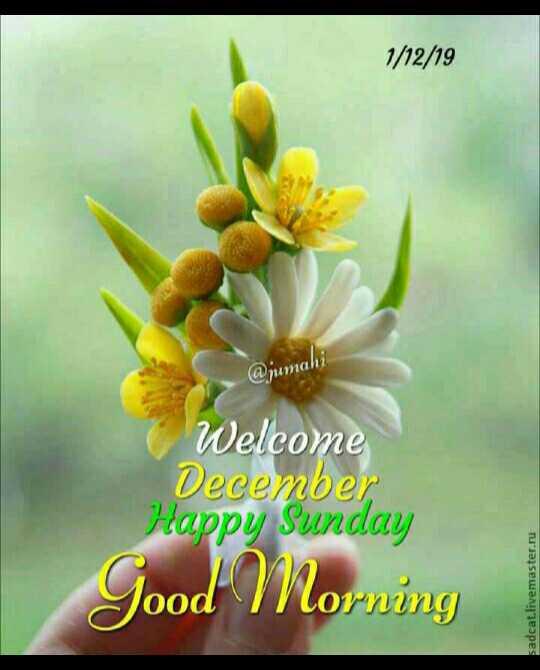 🌞 Good Morning🌞 - 1 / 12 / 19 @ humahi Welcome December Happy Sunday Good Morning sadcat . livemaster . ru - ShareChat
