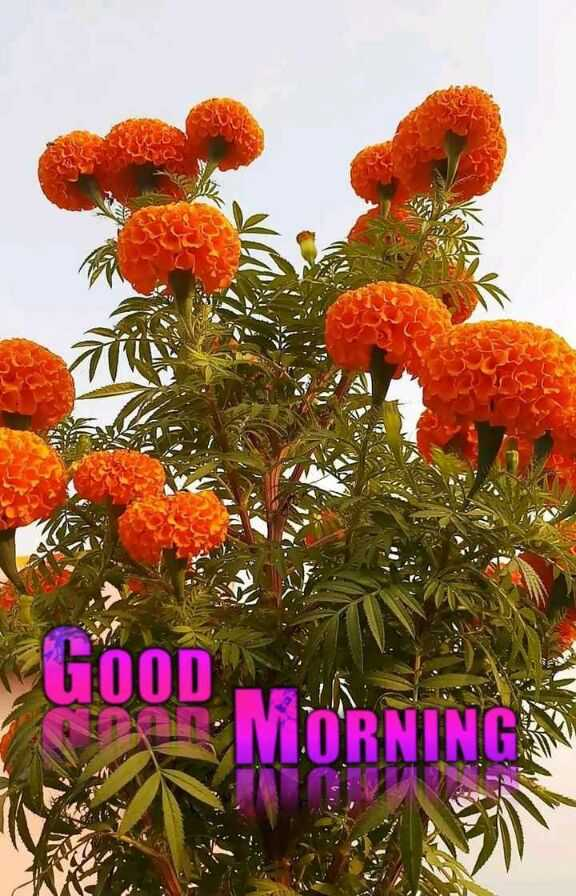 🌞 Good Morning🌞 - GOOD MORNINGS - ShareChat
