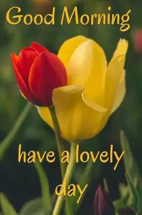 🌞 Good Morning🌞 - Good Morning have a lovely day - ShareChat