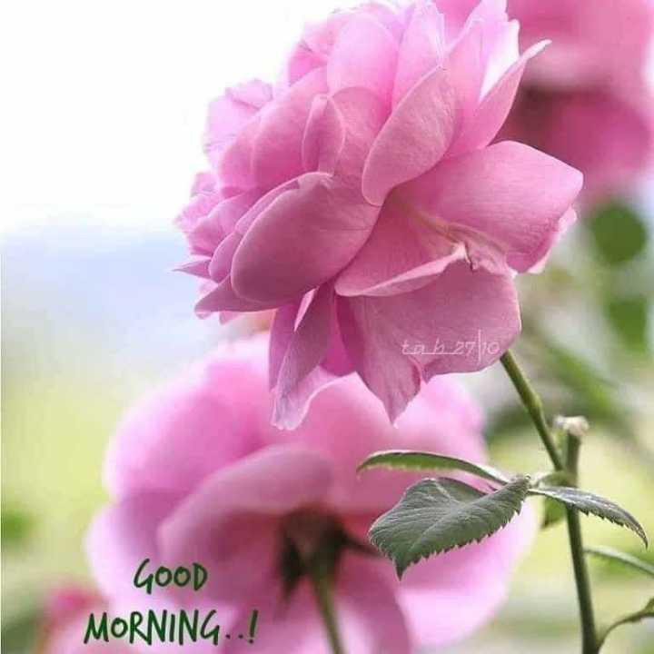 🌞 Good Morning🌞 - tab 2710 GOOD MORNING . . ! - ShareChat