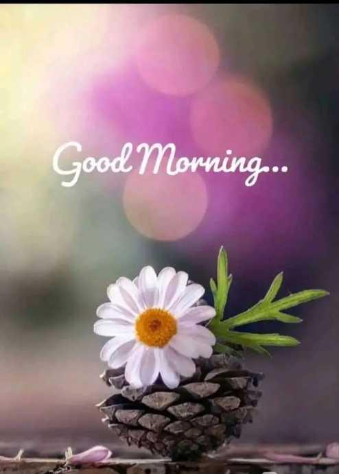 🌅 Good Morning - Good Morning . . . - ShareChat