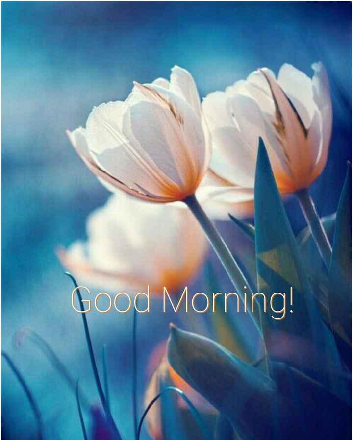 🌞Good Morning🌞 - Good Morning ! - ShareChat
