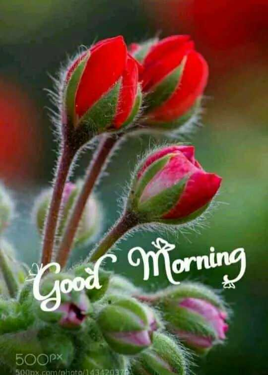🌞 Good Morning🌞 - Good Morning 500PX 500nx comfohioto 14342037 - ShareChat
