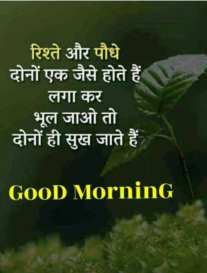🌞 Good Morning🌞 - रिश्ते और पौधे दोनों एक जैसे होते हैं । लगा कर भूल जाओ तो दोनों ही सुख जाते हैं GOOD Morning - ShareChat