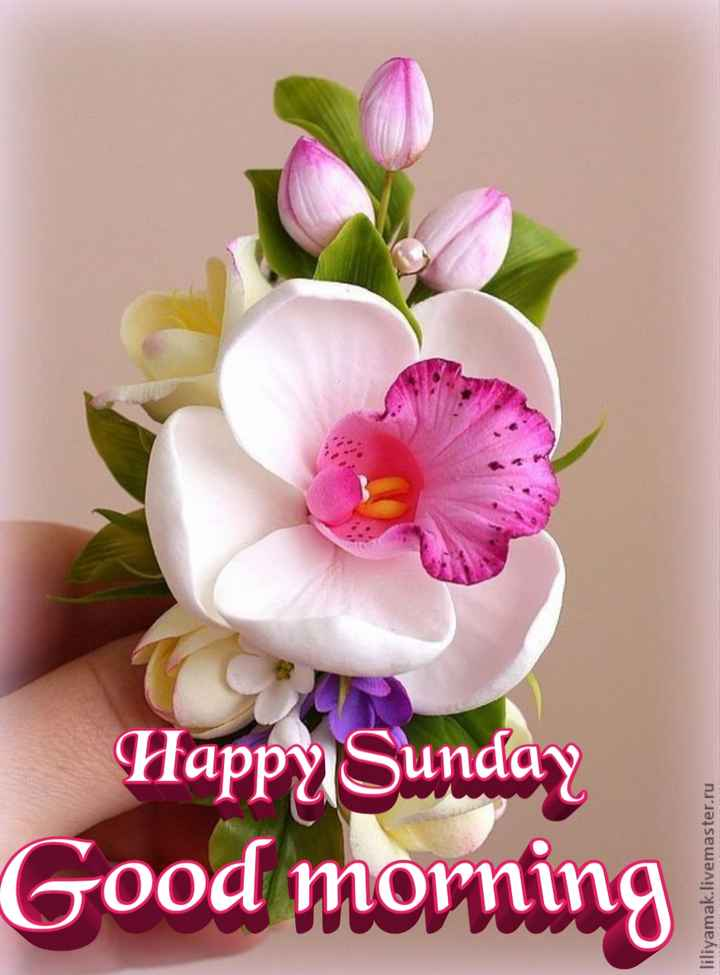 🌞Good Morning🌞 - Good morning Happy Sunday liliyamak . livemaster . ru - ShareChat