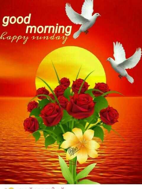 Good Morning - good morning happy sunday - ShareChat