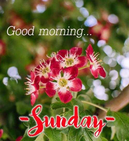 🌞 Good Morning🌞 - Good morning . . Sunday - ShareChat