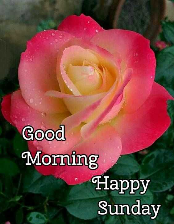 🌞Good Morning🌞 - Good Morning Happy Sunday - ShareChat