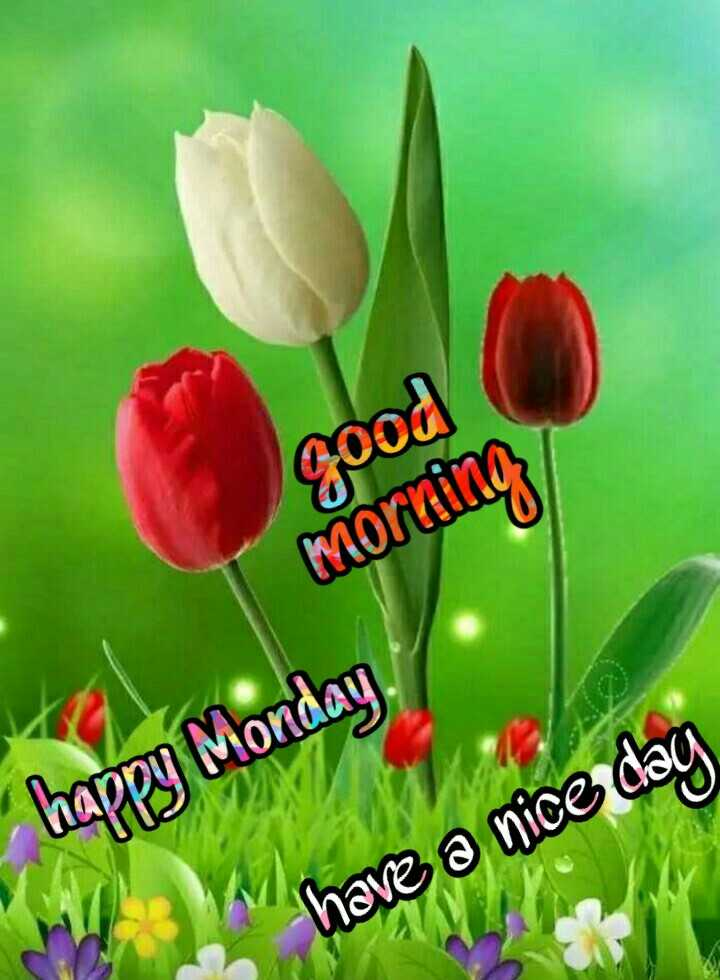🌅 Good Morning - good morning happy Monday have a nice day - ShareChat