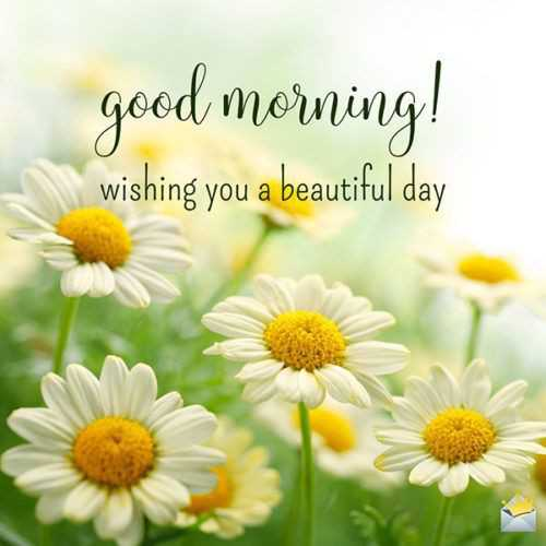🌞 Good Morning🌞 - good morning ! wishing you a beautiful day - ShareChat