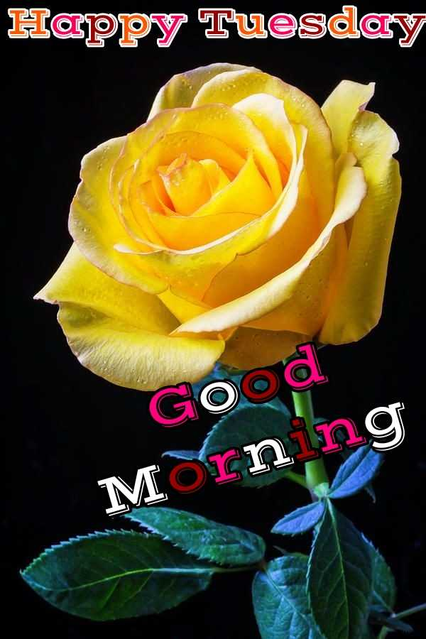 🌞Good Morning🌞 - Happy Tuesday Good Morning - ShareChat