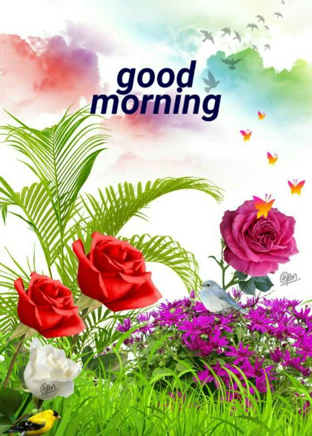 🌞 Good Morning🌞 - + good morning Con - ShareChat