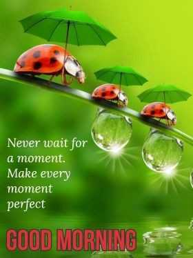 🌞Good Morning🌞 - Never wait for a moment . Make every moment perfect GOOD MORNING - ShareChat