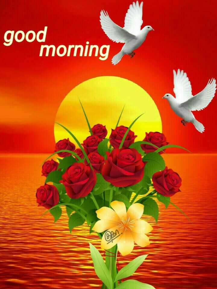 🌞 Good Morning🌞 - gou morning - ShareChat