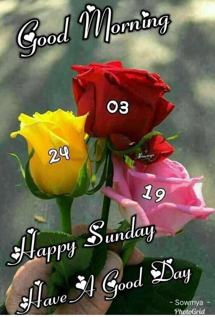 🌞Good Morning🌞 - Good Morning 03 24 Soumga 19 Sunday Happy Sunday 00u du * 4 Good Day Have - Sowmya PhotoGrid - ShareChat